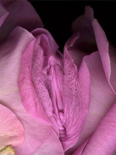 Красивые фотографии пизды розочкой фото 69-289